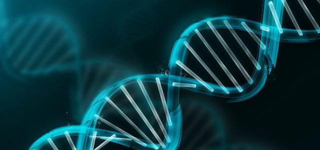 Le blogue du site MyHeritage, plateforme de généalogie en ligne, relate l'histoire d'un frère et d'une sœur qui se retrouvent grâce à une analyse d'ADN. Vous pouvez lire l'article ici: […]